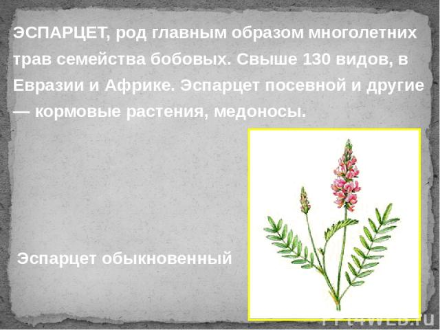ЭСПАРЦЕТ, род главным образом многолетних трав семейства бобовых. Свыше 130 видов, в Евразии и Африке. Эспарцет посевной и другие — кормовые растения, медоносы. Эспарцет обыкновенный