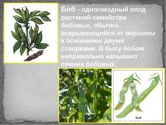 Боб - одногнездный плод растений семейства бобовых, обычно вскрывающийся от вершины к основанию двумя створками. В быту бобом неправильно называют семена бобовых.