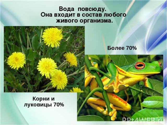 Корни и луковицы 70% Более 70% Вода повсюду. Она входит в состав любого живого организма.