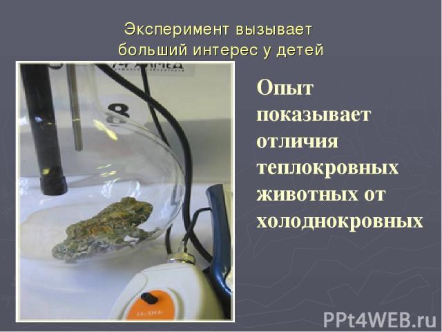 Эксперимент вызывает больший интерес у детей Опыт показывает отличия теплокровных животных от холоднокровных