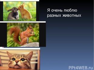 Я очень люблю разных животных
