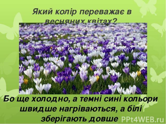 Який колір переважає в весняних квітах? Бо ще холодно, а темні сині кольори швидше нагріваються, а білі зберігають довше