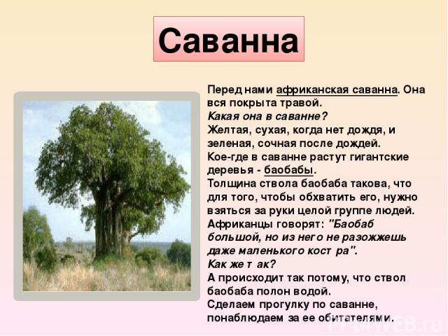 Саванна Перед намиафриканская саванна.Она вся покрыта травой. Какая она в саванне? Желтая, сухая, когда нет дождя, и зеленая, сочная после дождей. Кое-где в саванне растут гигантские деревья -баобабы. Толщина ствола баобаба такова, что для того,…