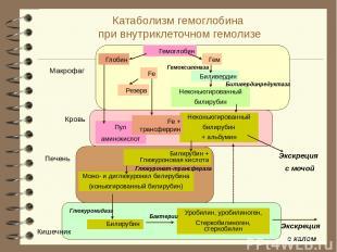 Катаболизм гемоглобина при внутриклеточном гемолизе