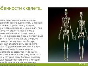 Особенности скелета. Женский скелет имеет значительные отличия от мужского. Коне