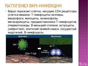 Вирус поражает клетки, несущие CD4 рецепторы (клетки-мишени: Т-лимфоциты-хелперы