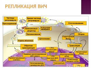 Клеточная мембрана Цитоплазма Проникновение Обратная транскрипция Хемокиновый ре