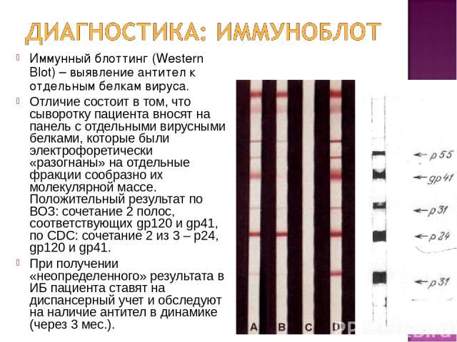 Иммунный блоттинг (Western Blot) – выявление антител к отдельным белкам вируса. Отличие состоит в том, что сыворотку пациента вносят на панель с отдельными вирусными белками, которые были электрофоретически «разогнаны» на отдельные фракции сообразно…
