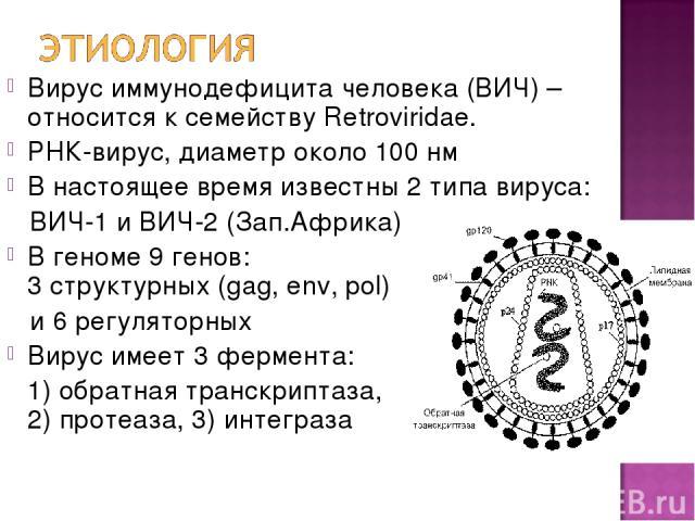 Вирус иммунодефицита человека (ВИЧ) – относится к семейству Retroviridae. РНК-вирус, диаметр около 100 нм В настоящее время известны 2 типа вируса: ВИЧ-1 и ВИЧ-2 (Зап.Африка) В геноме 9 генов: 3 структурных (gag, env, pol) и 6 регуляторных Вирус име…