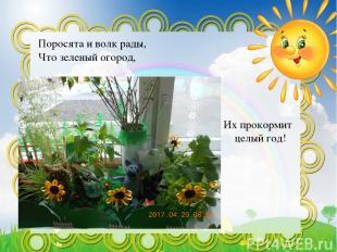 Поросята и волк рады, Что зеленый огород, Их прокормит целый год!