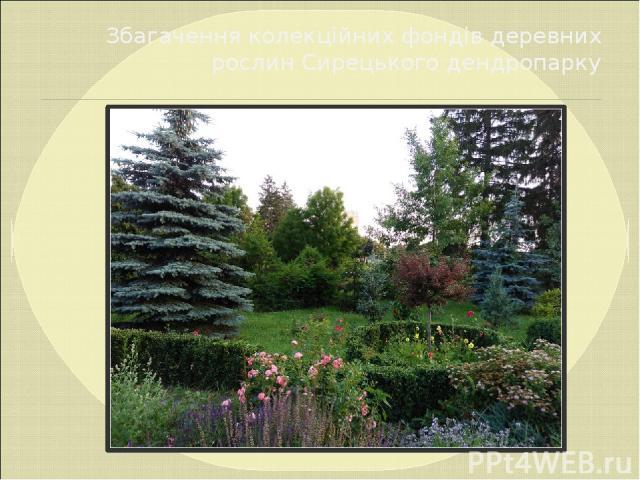 Збагачення колекційних фондів деревних рослин Сирецького дендропарку