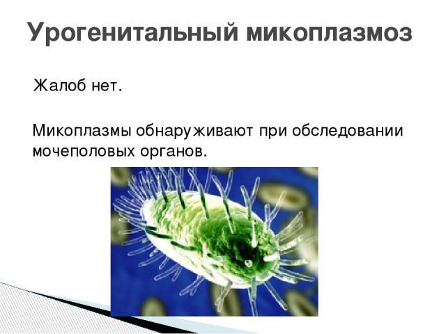 Жалоб нет. Микоплазмы обнаруживают при обследовании мочеполовых органов. Урогенитальный микоплазмоз