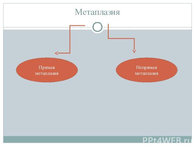 Метаплазия Прямая метаплазия Непрямая метаплазия