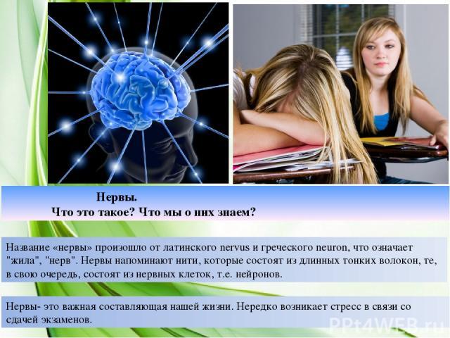 Нервы. Что это такое? Что мы о них знаем? Название «нервы» произошло от латинского nervus и греческого neuron, что означает