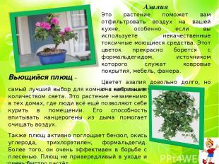Азалия Это растение поможет вам отфильтровать воздух на вашей кухне, особенно ес