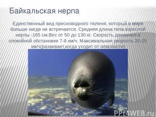 Байкальская нерпа Единственный вид пресноводного тюленя, который в мире больше н