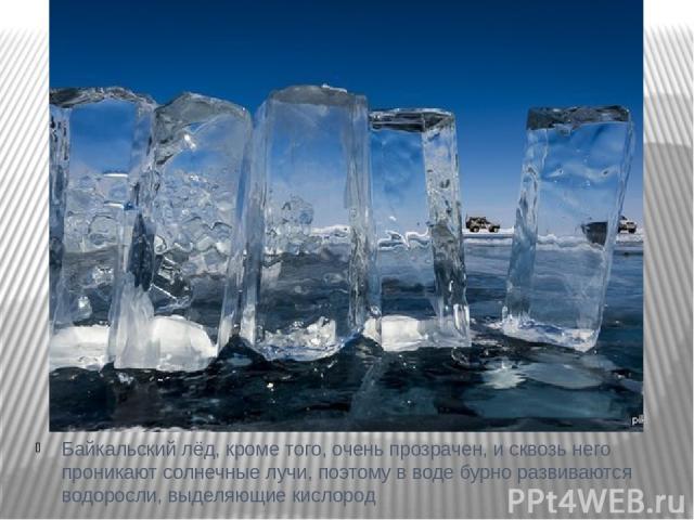 Байкальский лёд, кроме того, очень прозрачен, и сквозь него проникают солнечные лучи, поэтому в воде бурно развиваются водоросли, выделяющие кислород