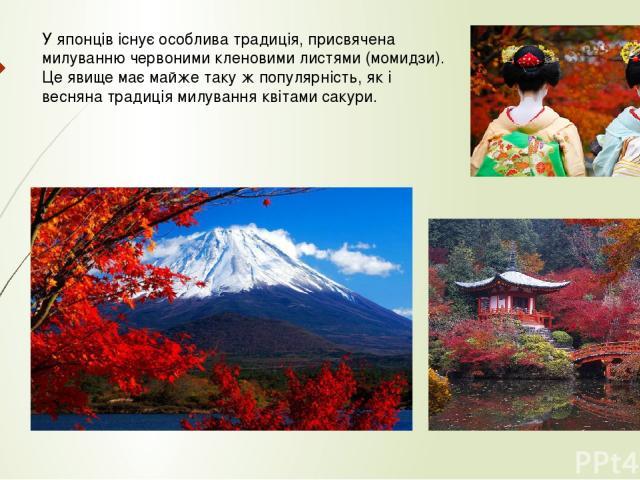 У японців існує особлива традиція, присвячена милуванню червоними кленовими листями (момидзи). Це явище має майже таку ж популярність, як і весняна традиція милування квітами сакури.