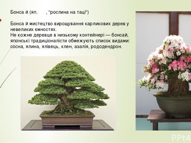 Бонса й (яп. 盆栽,