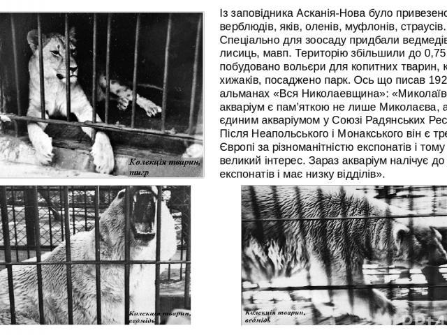 Із заповідника Асканія-Нова було привезено бізонів, верблюдів, яків, оленів, муфлонів, страусів. Спеціально для зоосаду придбали ведмедів, вовків, лисиць, мавп. Територію збільшили до 0,75 га. Було побудовано вольєри для копитних тварин, клітки для …