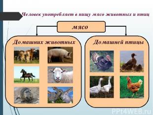 Человек употребляет в пищу мясо животных и птиц