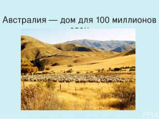 Австралия — дом для 100 миллионов овец