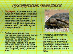 СУХОПУТНЫЕ ЧЕРЕПАХИ Гоферы отличаются от других наземных черепах уплощенными пер