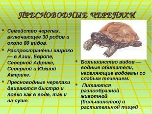 ПРЕСНОВОДНЫЕ ЧЕРЕПАХИ Семейство черепах, включающее 30 родов и около 80 видов. Р