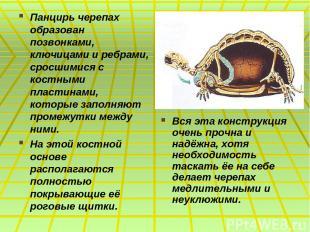 Панцирь черепах образован позвонками, ключицами и ребрами, сросшимися с костными
