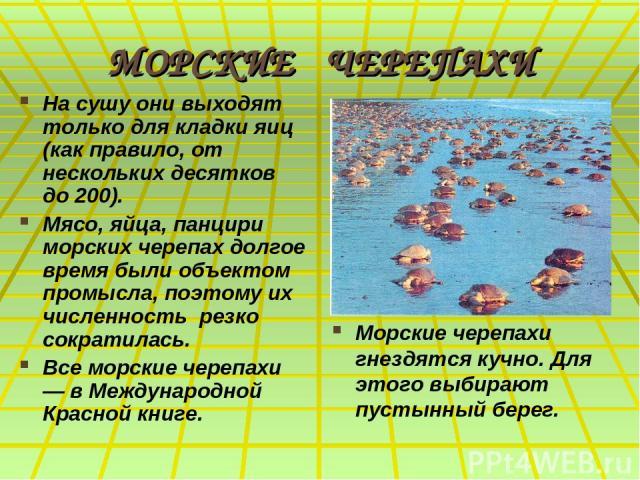 МОРСКИЕ ЧЕРЕПАХИ На сушу они выходят только для кладки яиц (как правило, от нескольких десятков до 200). Мясо, яйца, панцири морских черепах долгое время были объектом промысла, поэтому их численность резко сократилась. Все морские черепахи — в Межд…