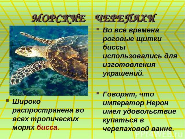 МОРСКИЕ ЧЕРЕПАХИ Широко распространена во всех тропических морях бисса. Во все времена роговые щитки биссы использовались для изготовления украшений. Говорят, что император Нерон имел удовольствие купаться в черепаховой ванне.