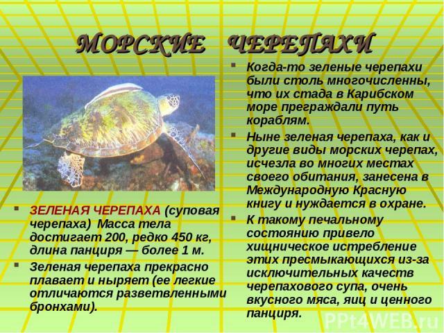 МОРСКИЕ ЧЕРЕПАХИ ЗЕЛЕНАЯ ЧЕРЕПАХА (суповая черепаха) Масса тела достигает 200, редко 450 кг, длина панциря — более 1 м. Зеленая черепаха прекрасно плавает и ныряет (ее легкие отличаются разветвленными бронхами). Когда-то зеленые черепахи были столь …