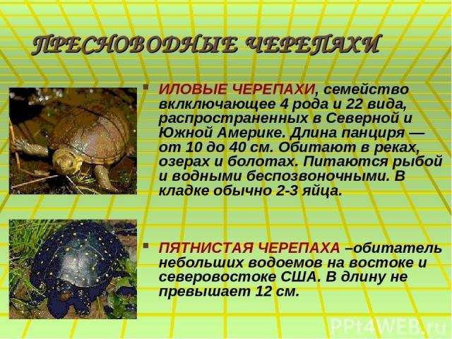 ПРЕСНОВОДНЫЕ ЧЕРЕПАХИ ИЛОВЫЕ ЧЕРЕПАХИ, семейство вклключающее 4 рода и 22 вида, распространенных в Северной и Южной Америке. Длина панциря — от 10 до 40 см. Обитают в реках, озерах и болотах. Питаются рыбой и водными беспозвоночными. В кладке обычно…