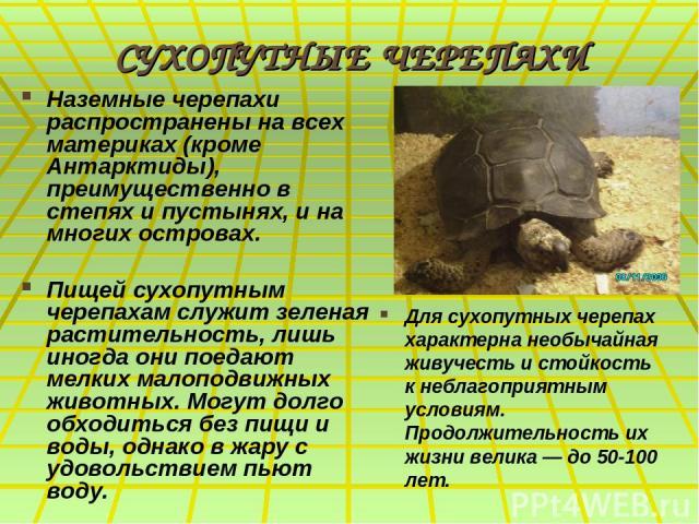 СУХОПУТНЫЕ ЧЕРЕПАХИ Наземные черепахи распространены на всех материках (кроме Антарктиды), преимущественно в степях и пустынях, и на многих островах. Пищей сухопутным черепахам служит зеленая растительность, лишь иногда они поедают мелких малоподвиж…