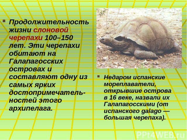 Продолжительность жизни слоновой черепахи 100–150 лет. Эти черепахи обитают на Галапагосских островах и составляют одну из самых ярких достопримечатель-ностей этого архипелага. Недаром испанские мореплаватели, открывшие острова в 16 веке, назвали их…