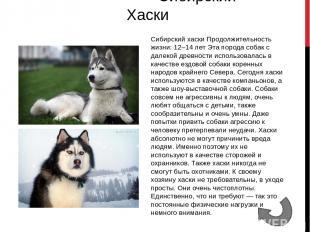 Самые сильные собаки Самые красивые собаки Самые умные собаки
