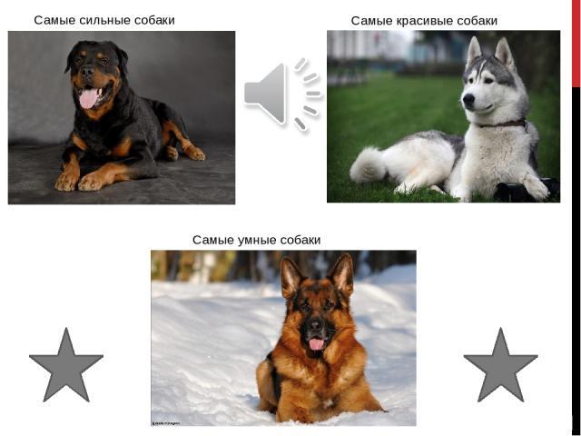 Самые сильные Все собаки сильны по своему, но самые сильные из них берутся на самые ответственные задания: как охрана дома, или даже людей. Алабай Ротвейлер Питбультерьер МЕНЮ