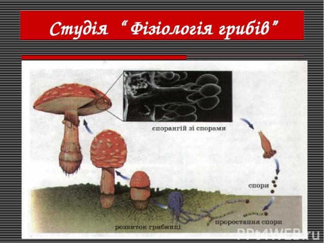 """Студія """" Фізіологія грибів"""""""