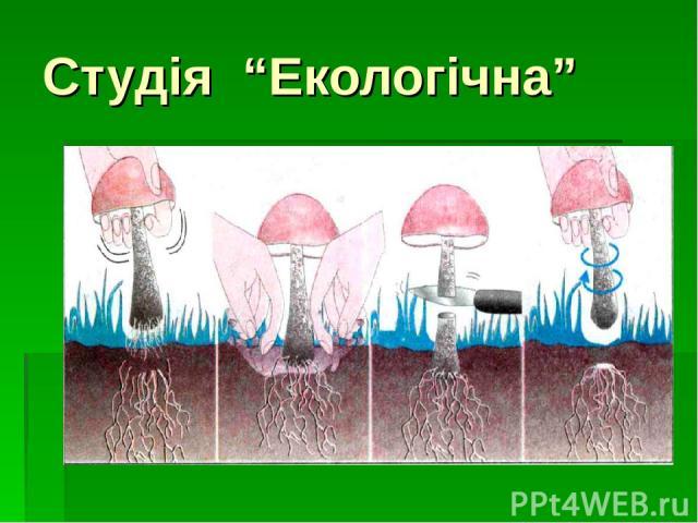 """Студія """"Екологічна"""""""