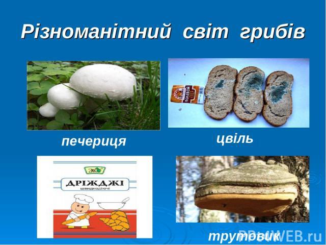 Різноманітний світ грибів печериця цвіль трутовик