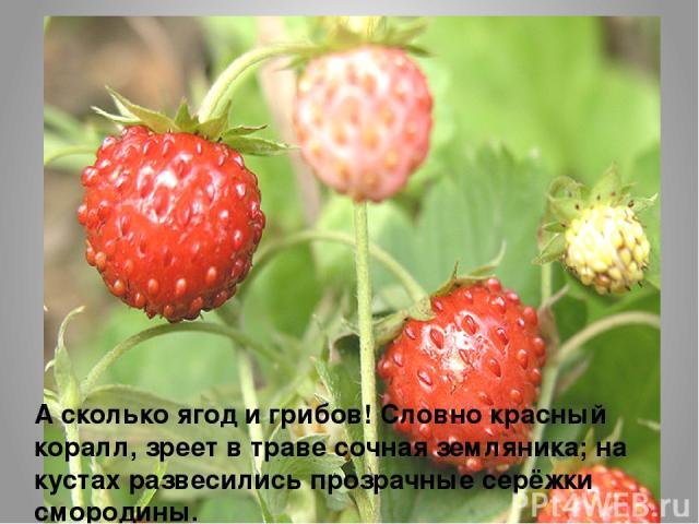 А сколько ягод и грибов! Словно красный коралл, зреет в траве сочная земляника; на кустах развесились прозрачные серёжки смородины.