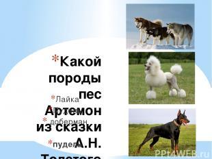 Какой породы пес Артемон из сказки А.Н. Толстого «Золотой ключик, или приключени