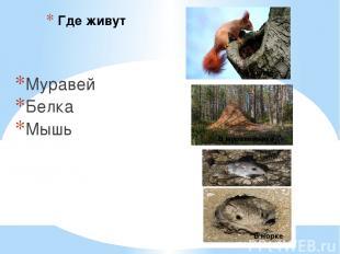 Где живут Муравей Белка Мышь В муравейнике В дупле В норке
