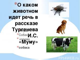 О каком животном идет речь в рассказе Тургенева И.С. «Муму» Муха Собака корова с