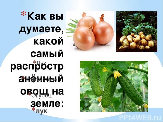Как вы думаете, какой самый распространённый овощ на земле: Лук Картофель Огурец лук