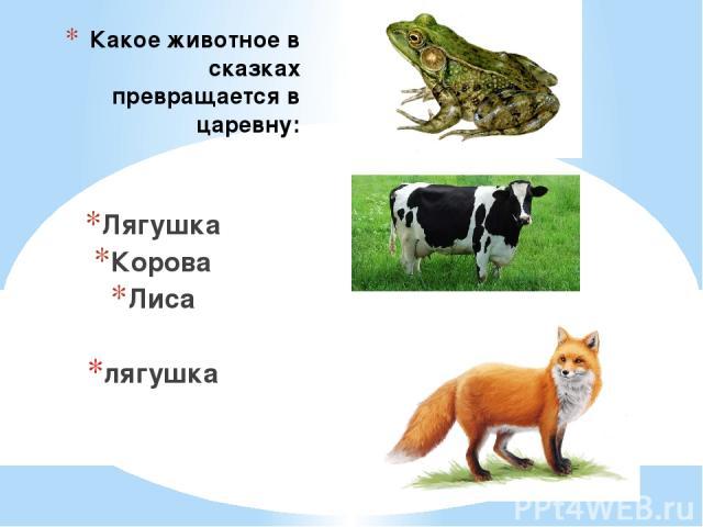 Какое животное в сказках превращается в царевну: Лягушка Корова Лиса лягушка