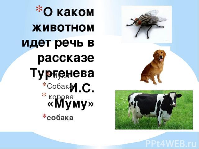 О каком животном идет речь в рассказе Тургенева И.С. «Муму» Муха Собака корова собака