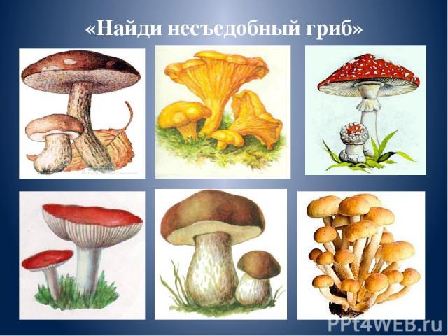 «Найди несъедобный гриб»