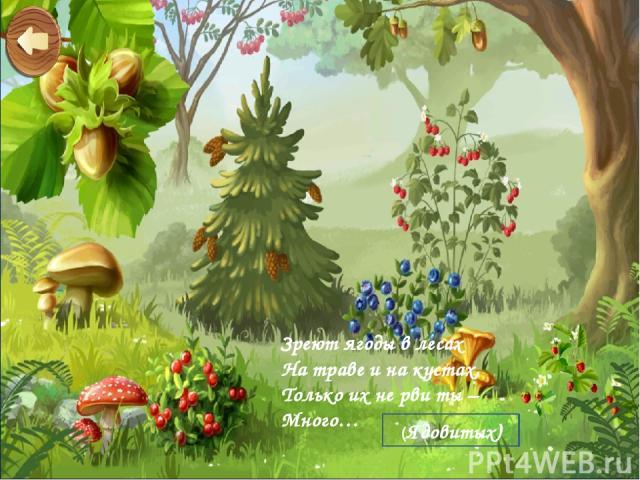 Зреют ягоды в лесах На траве и на кустах, Только их не рви ты – Много… (Ядовитых)