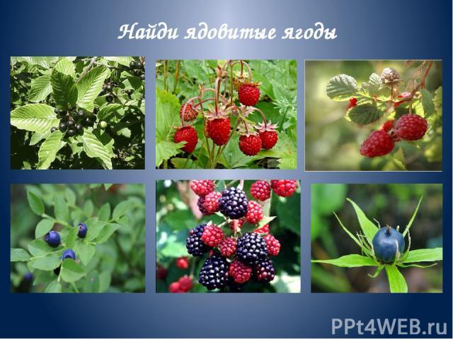 Найди ядовитые ягоды